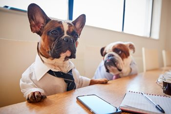 Are Office Dogs Worth the Hype?