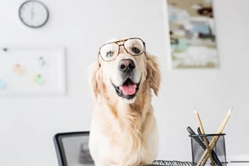 Bringing Your Pet to Work with You